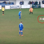 Video: Hilarious moment when a dog interrupted a football match for 7 full minutes