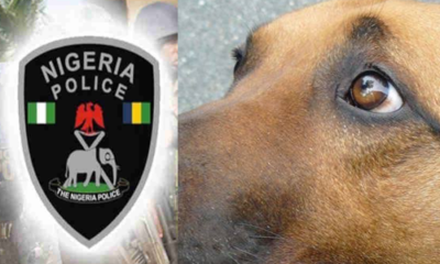LOL!!! Nigerian Police allegedly asks lady for the receipt of her dog
